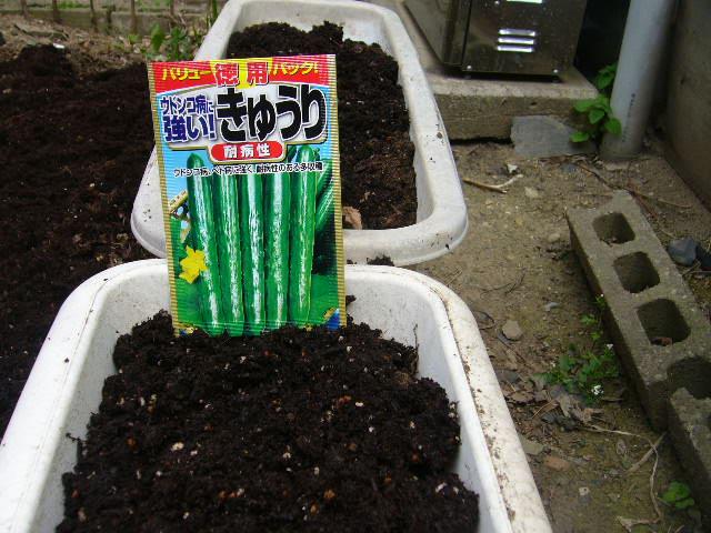 家庭菜園、真っ盛り。。