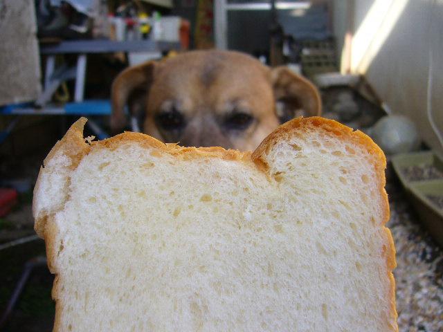 食パンとクロ。。