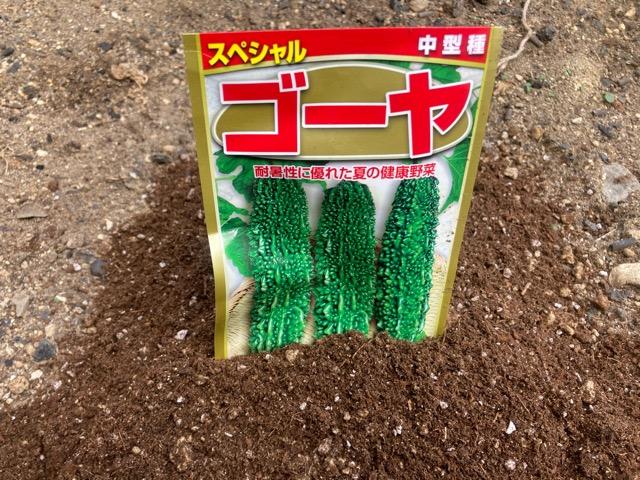 ゴーヤの種を蒔きました。。